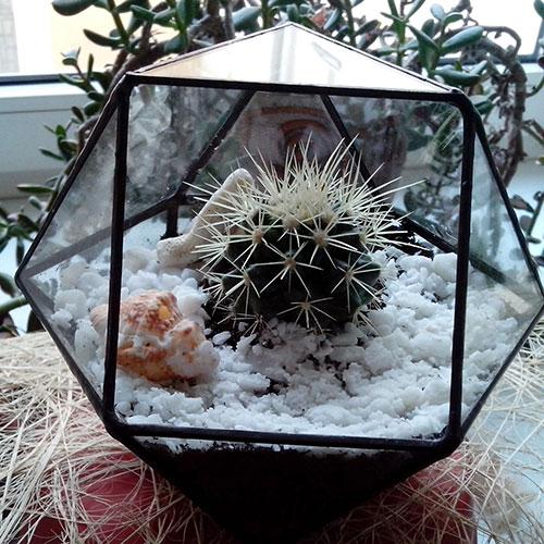 Флорариум с кактусом
